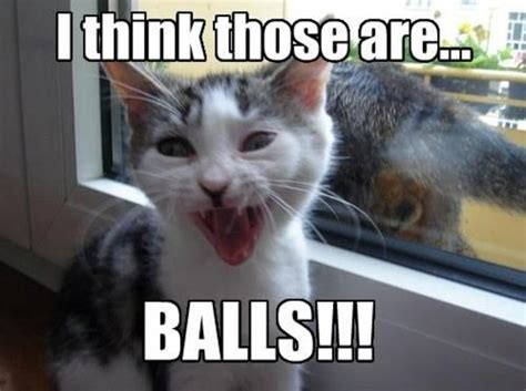 Lolcat Meme - balls lolcats know your meme