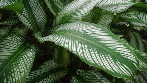 Livingroom Edinburgh by 100 Best Plants For Low Light 44 Best Gardening