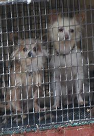 missouri puppy mills anti puppy mill initiative ahead in missouri stilwell positively