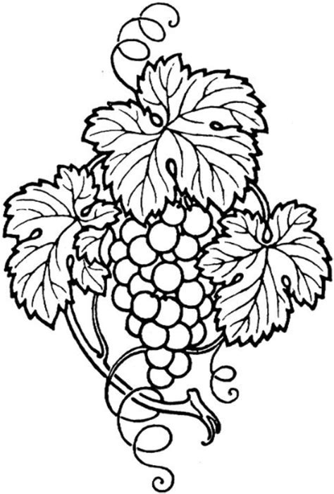 drawn grapes grape leaf pencil and in color drawn grapes drawn grape grape leaf pencil and in color drawn grape
