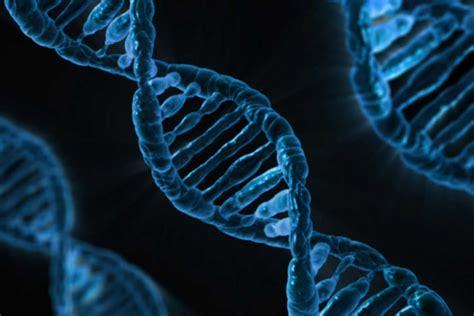 biomedical science bsc hons canterbury undergraduate courses university  kent