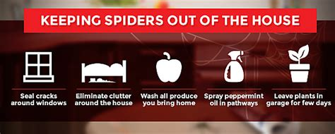 how to get rid of spiders in christmas tree how to get rid of spiders in the house