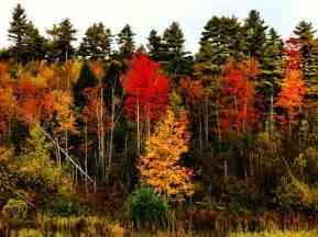 parks fall foliage pocket ranger 174 blog