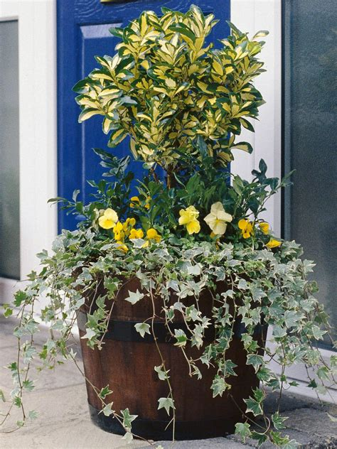 how to protect potted plants in winter hgtv