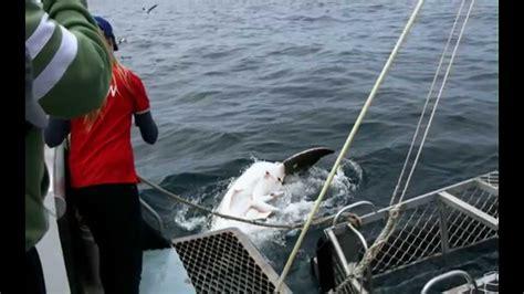 gabbia squali immersione in gabbia con squalo bianco lincoln