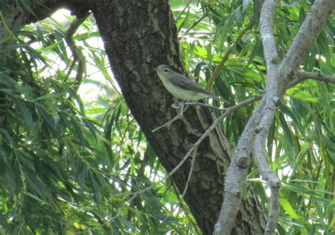 western ohio birds help me identify a bird whatbird