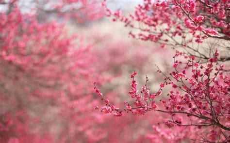 Pink 4K Spring Wallpaper   Free 4K Wallpaper