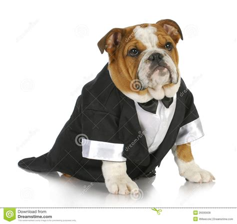 fancy puppy fancy royalty free stock photos image 26595608