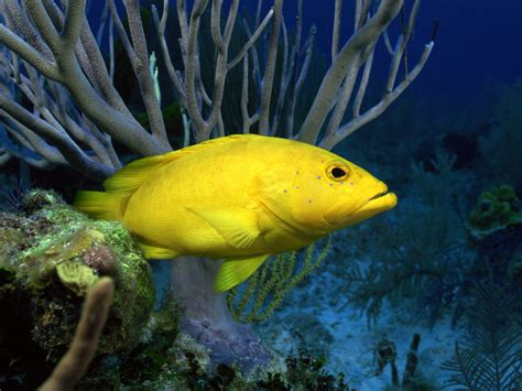 fish for life a best wallpapers colorful fish wallpapers