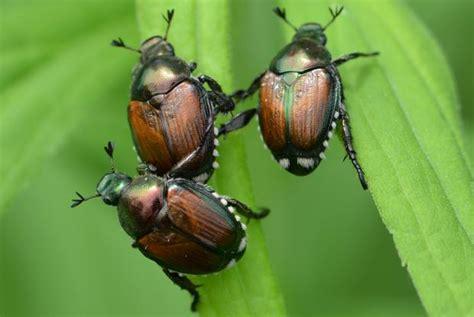 le scarab 233 e ces enfants qui ne scarab 233 es espace pour la vie