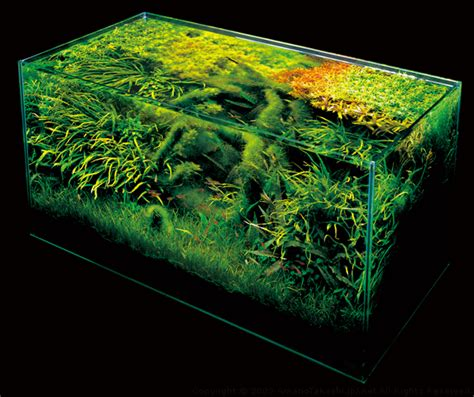 ada aquascaping nature aquarium photographs amanotakashi net