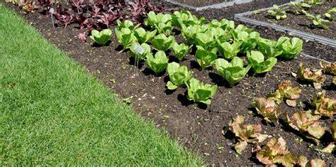 potager de jardin cr 233 er potager dans un jardin de particulier soonsoonsoon
