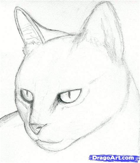 cat drawings pencil how to draw a cat head draw a