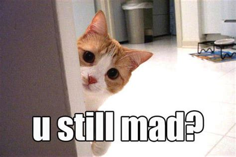 Mad Cat Meme - you still mad meme cats
