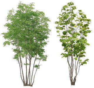 Trees Lapar png images for skechup waroeng teknik