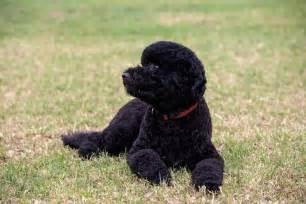 Obama family welcomes new dog sunny the huffington post