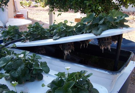 Small Home Hydroponic Systems Aeroponic System Diagram Aeroponic Free Engine Image For