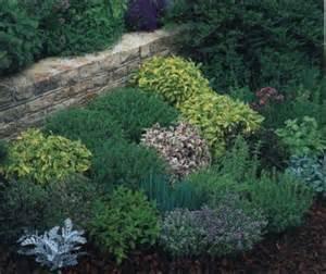 piante aromatiche da giardino piante aromatiche giardino