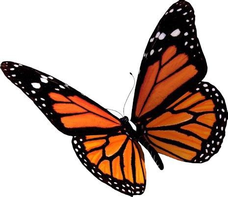 best free butterfly png image #6743 free icons and png