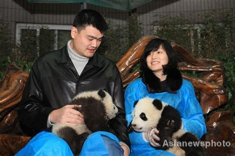 yao ming house yao ming helps release 6 pandas china org cn
