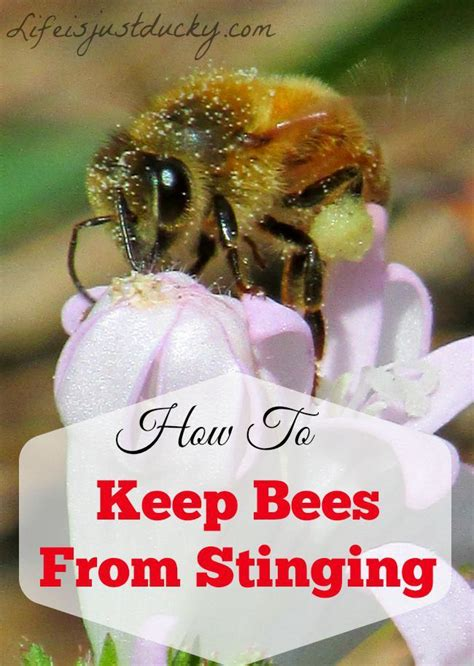 How To Keep Bees Or Bee Keeping In Rhode Island 14 best honey bees images on bees honey bees