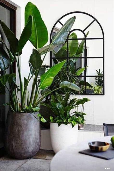 office plants that don t need sunlight adammayfield co indoor plants green pinterest plants indoor palms