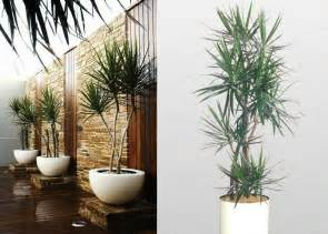 Design For Small Garden Spaces - dracaena marginata indoor plant front of office and home home landscaping
