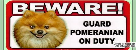 pomeranian quotes pomeranian quotes and sayings quotesgram