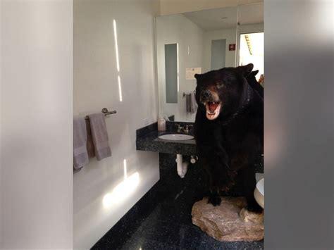 bear in a bathtub virginia gov terry mcauliffe bear ly escapes bathroom