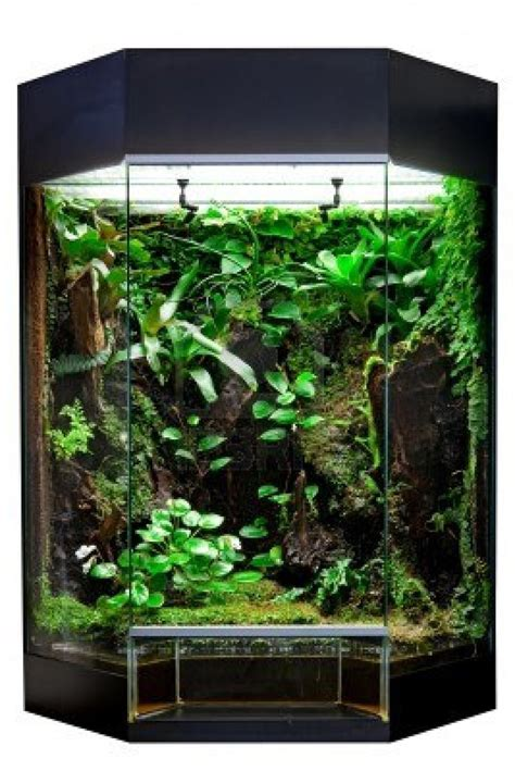 27 best reptiles and hibians images on pinterest 51 best images about awesome reptile terrariums