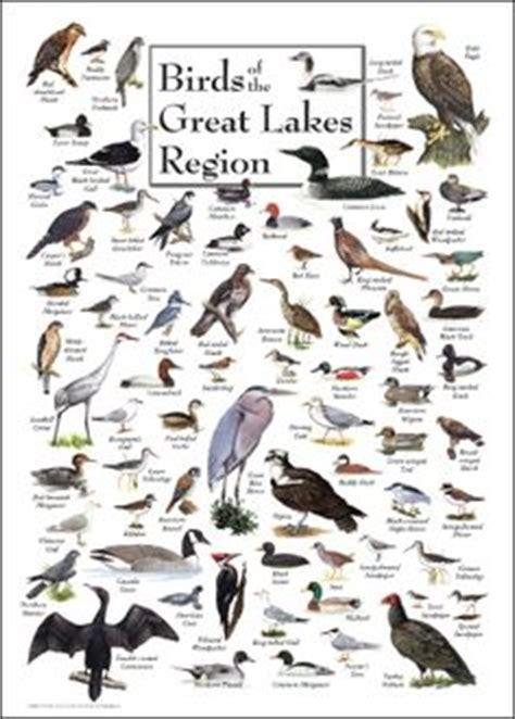 1000+ images about birding on pinterest | bird