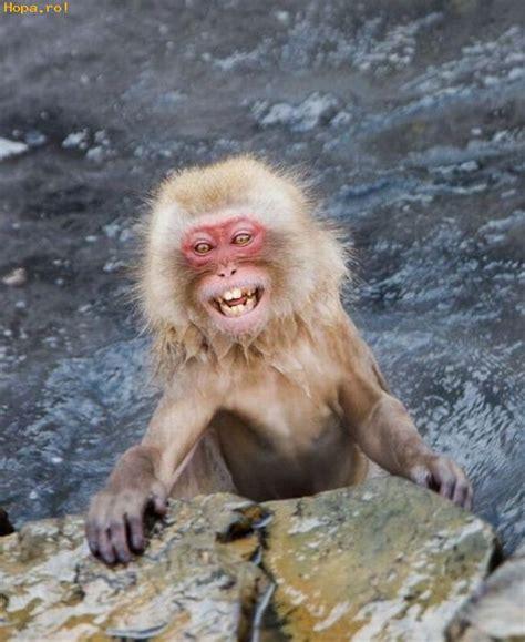 imagenes comicas de monos mono mojado fotos comicas criaturas funpub net