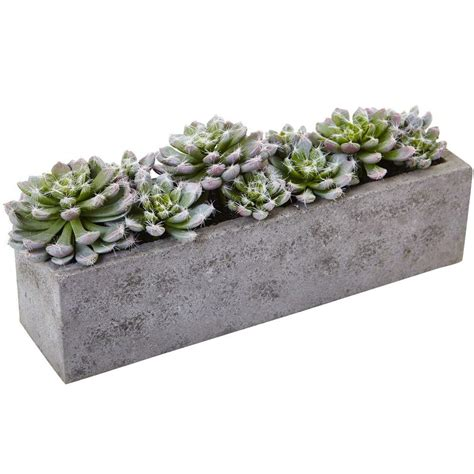 concrete succulent planter nearly succulent garden with textured concrete planter 4544 the home depot
