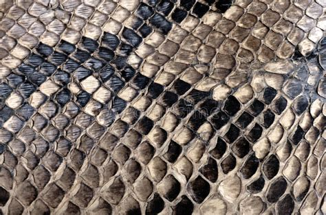 with snake scales stock image image of human design 31920181 python texture stock photo image of organism decoration 31200184