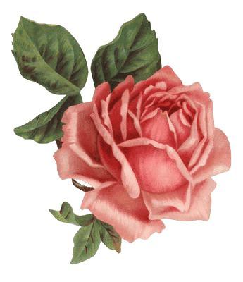 imagenes vintage en rosa 30 rosas vintage para scrap rose png