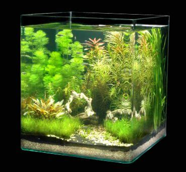 Pinset Aquascape nano aquarium f 252 r die k 252 che aquaria aquascapes aquariums fish tanks and betta