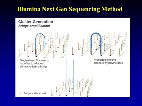illumina sequencing method chem 395 bioanalytical chemistry ppt