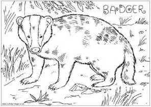 badger colouring page
