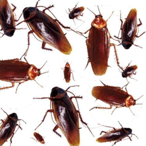 how to get rid of cockroaches in house how to get rid of cockroaches in your home