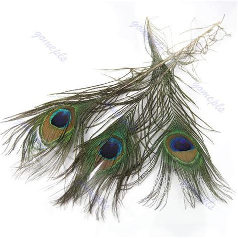 Bulu Kulot by Buy Bulu Merak Asli Panjang 25 30 Cm Untuk Souvenir