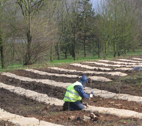 Plantation Ls by Plantation De Haies Pour Espaces Verts Et Naturels Eive