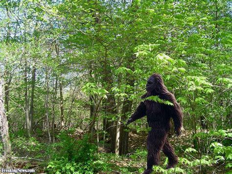 the of bigfoot bigfoot pictures