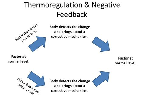 thermoregulation powerpoint  id