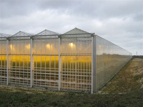 Thanet Earth Greenhouse and yellow  © David Anstiss :: Geograph Britain and Ireland