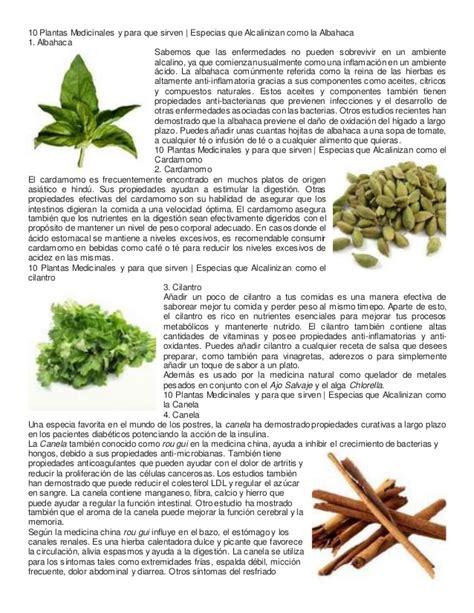 las 10 mejores flores medicinales 10 plantas medicinales y para que sirven