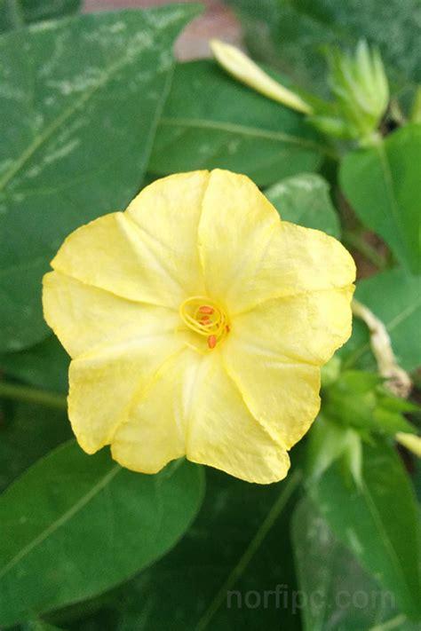 imagenes de flores solas fotos de flores y rosas para fondo de pantalla del celular