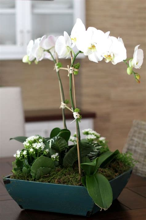 Orchid Planter Ideas by 1000 Ideas About Potted Orchid Centerpiece On