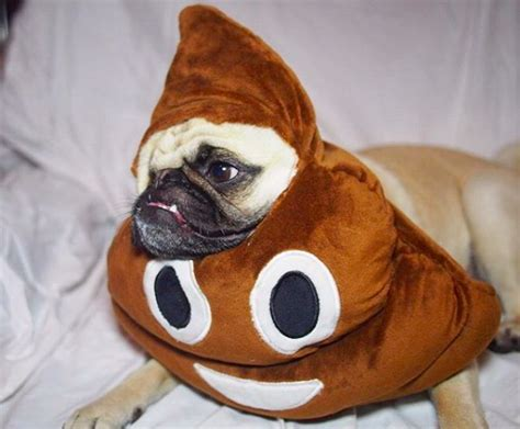 pug emoji it s impossible to be cuter than this one eyed costumed pug