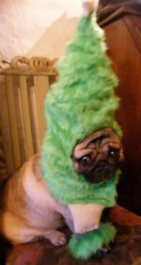 pug christmas tree pug nation other fur friends