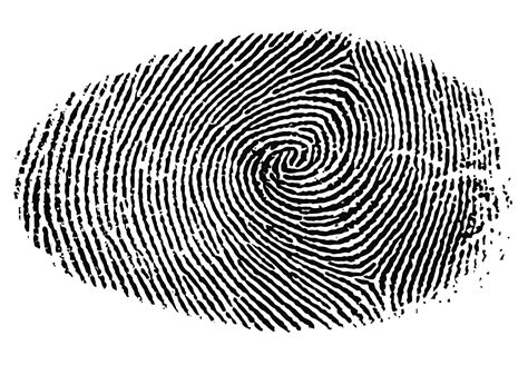 finger prints a novel why are finger prints on both the of an individual